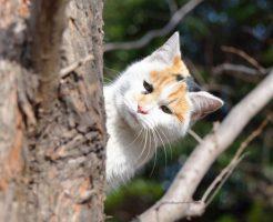 野良猫の餌やりと鳩への餌やり