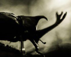 ゴキブリの駆除方法