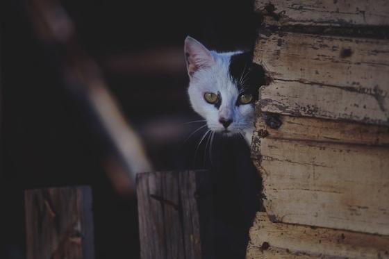 野良猫にネズミ駆除を依頼