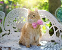 アイドル猫