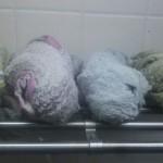 雑巾は複数枚を絞りだめして使うと便利