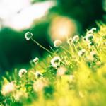雨が降れば雑草が伸びる。草刈りの時期になってきました。草刈りのコツ・方法とは?