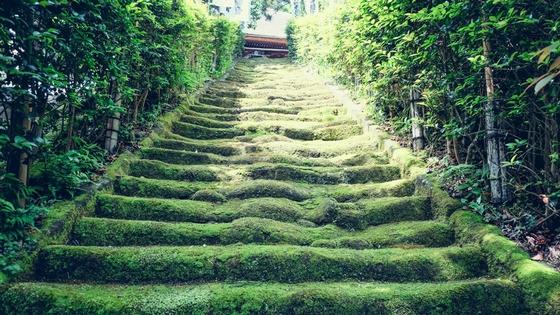 苔生す階段